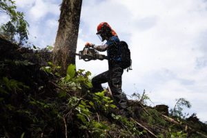 林業の仕事を紹介する記事のアイキャッチ画像