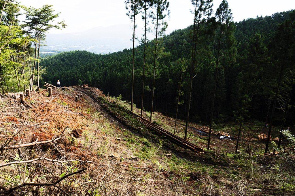 林業の現場を見渡す人